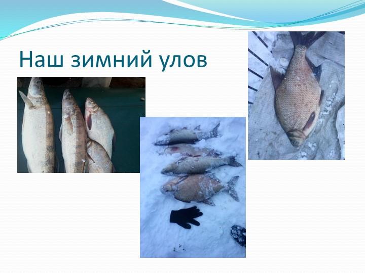 Наш зимний улов