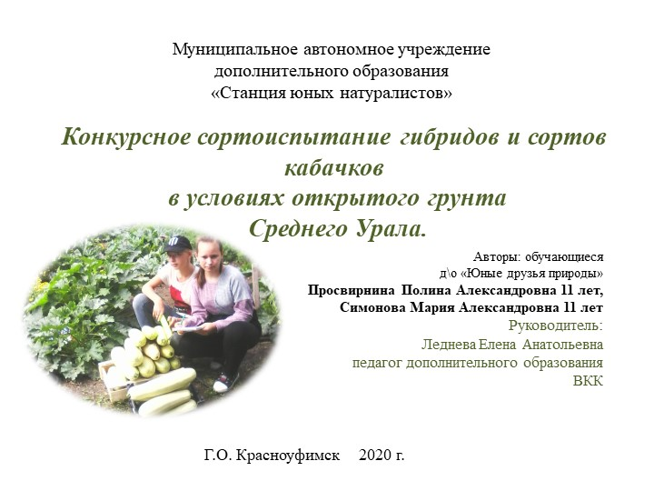Конкурсное сортоиспытание гибридов и сортов кабачков в условиях открытого гр...
