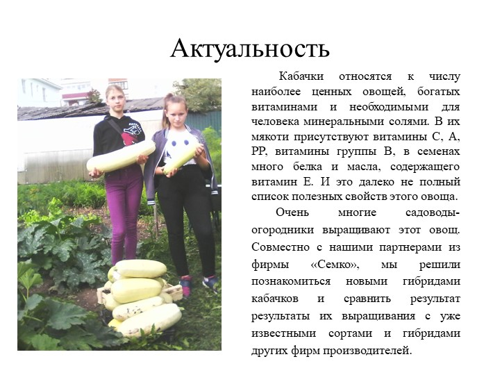 Актуальность  Кабачки относятся к числу наиболее ценных овощей, богатых витам...