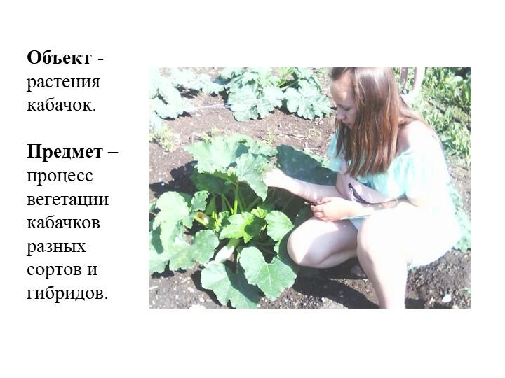 Объект - растения кабачок.Предмет – процесс вегетации кабачков разных сорто...