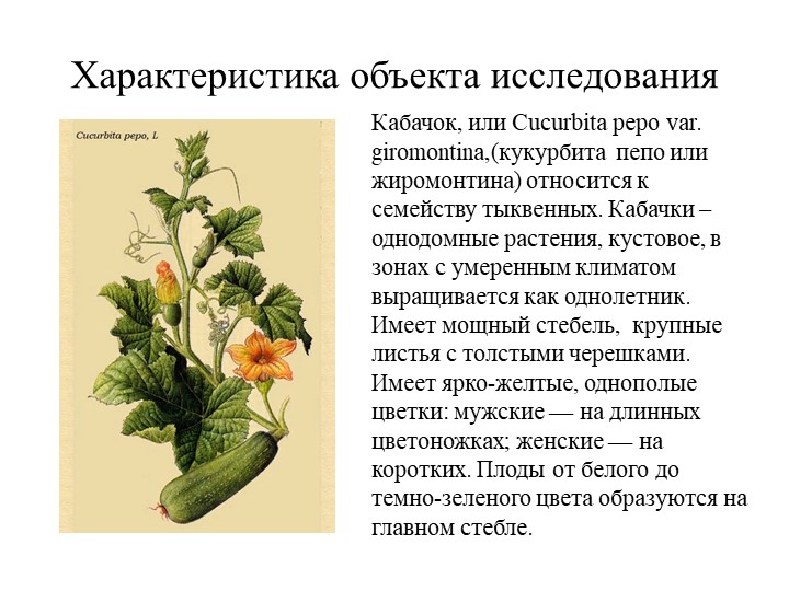 Характеристика объекта исследования Кабачок, или Cucurbita pepo var. giromont...