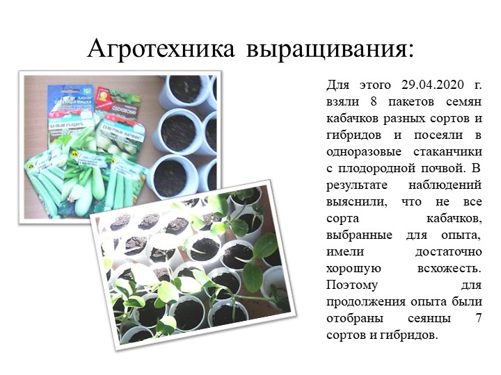 Агротехника выращивания:Для этого 29.04.2020 г. взяли 8 пакетов семян кабачко...
