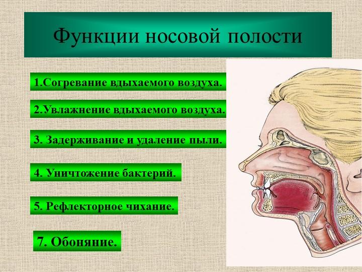 Функции носовой полости1.Согревание вдыхаемого воздуха.2.Увлажнение вдыхаемог...