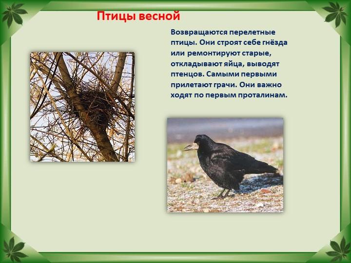 Птицы веснойВозвращаются перелетные птицы. Они строят себе гнёзда или ремонти...