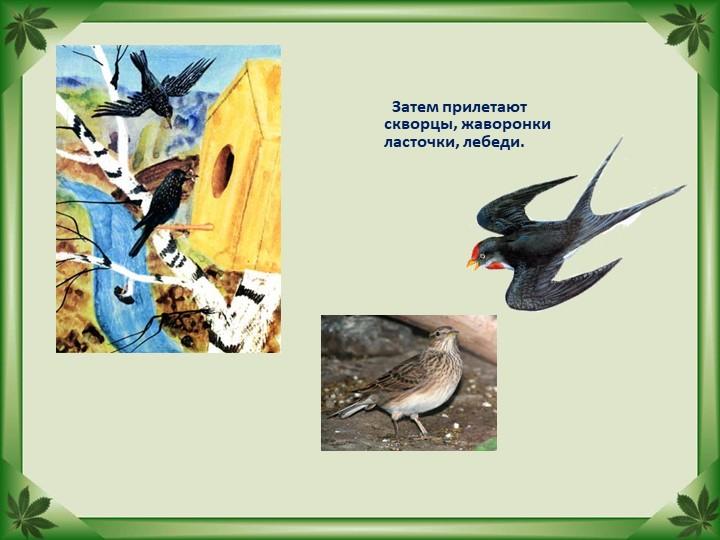 Затем прилетают скворцы, жаворонки ласточки, лебеди.