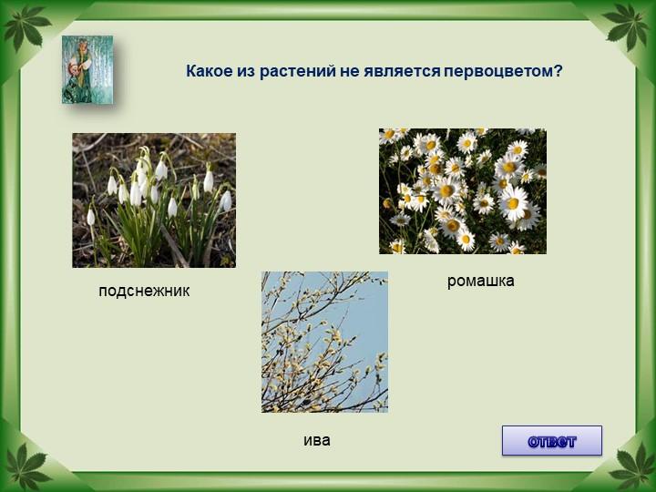 Какое из растений не является первоцветом?ответподснежникромашкаива