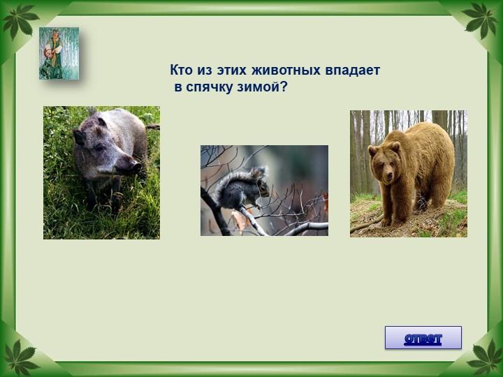 Кто из этих животных впадает в спячку зимой?ответ