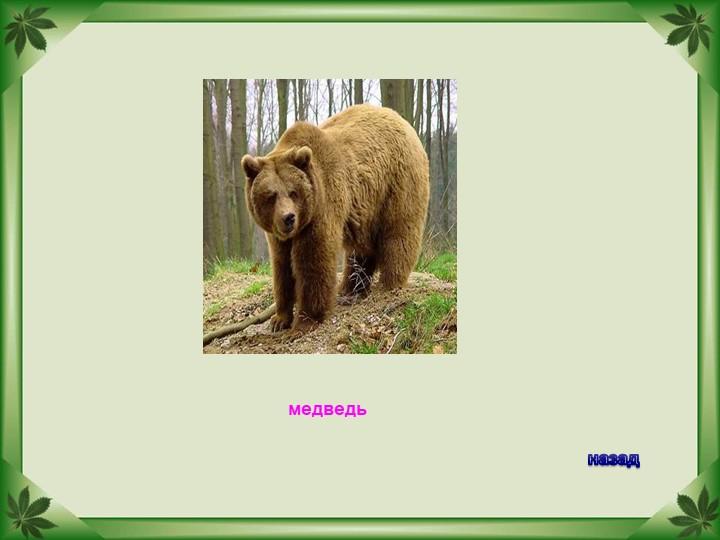 медведьназад