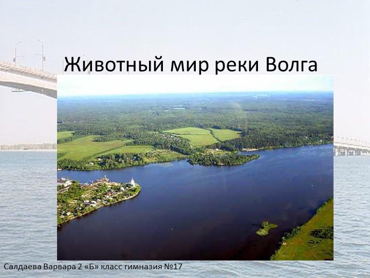 Животный мир реки ВолгаСалдаева Варвара 2 «Б» класс гимназия №17