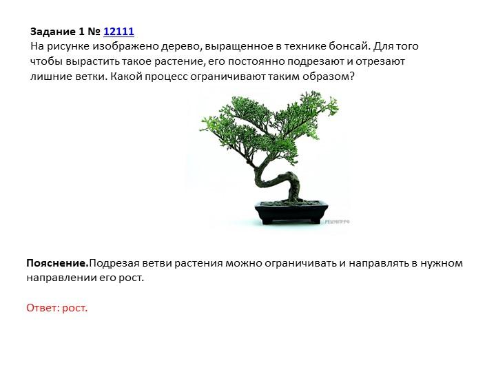 Задание 1№12111На рисунке изображено дерево, выращенное в технике бонсай....