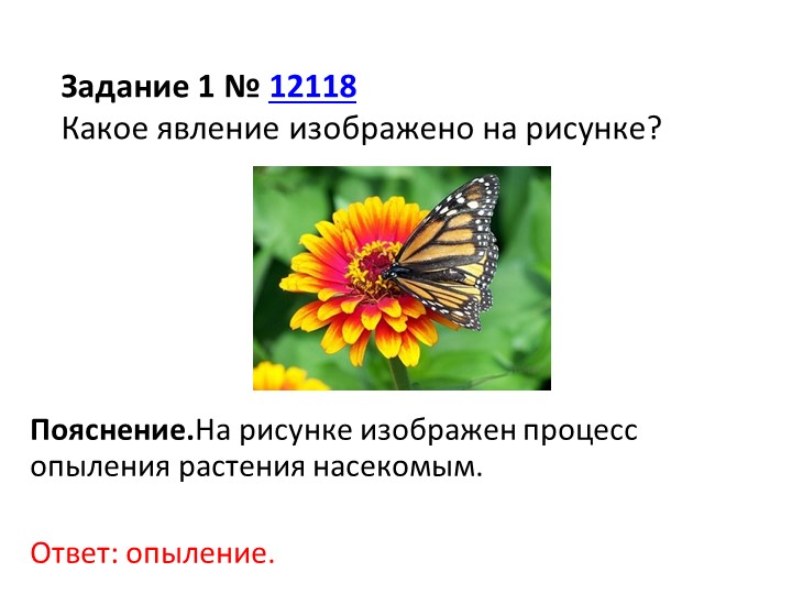 Пояснение.На рисунке изображен процесс опыления растения насекомым.Ответ:...