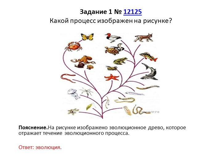 Задание 1№12125Какой процесс изображен на рисунке?Пояснение.На рисунке из...