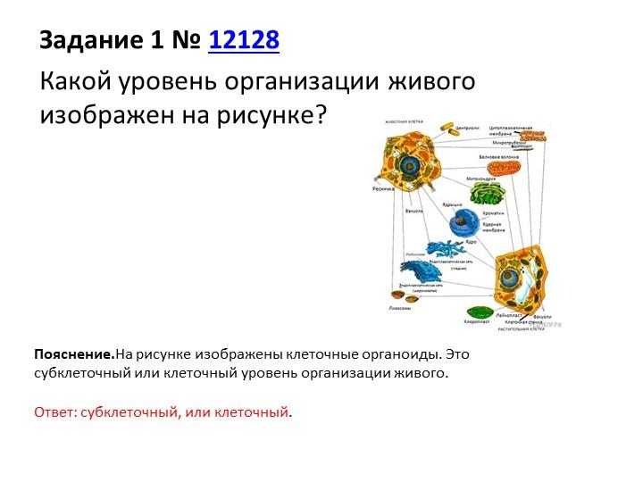 Задание 1№12128Какой уровень организации живого изображен на рисунке?Пояс...