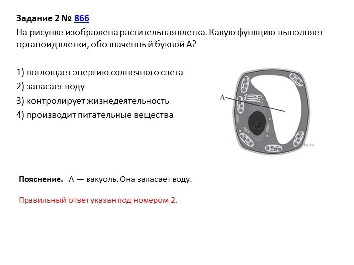 Задание 2№866На рисунке изображена растительная клетка. Какую функцию выпо...