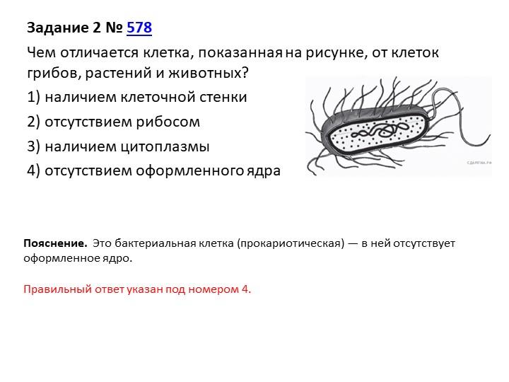 Задание 2№578Чем отличается клетка, показанная на рисунке, от клеток грибо...