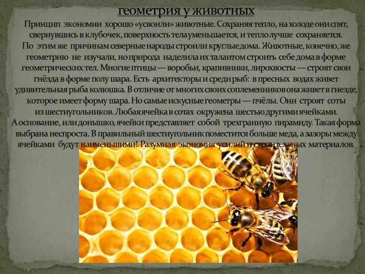 геометрия у животных Принцип  экономии  хорошо «усвоили» животные. Сохран...