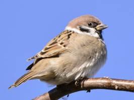 http://birds.kz/photos/0306/003/03060119501.jpg