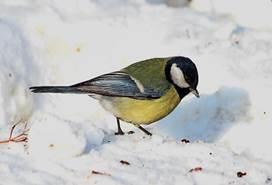 http://birds.kz/photos/0121/001/01210004101.jpg