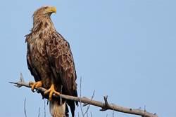 Картинки по запросу орланы в ульяновске фото
