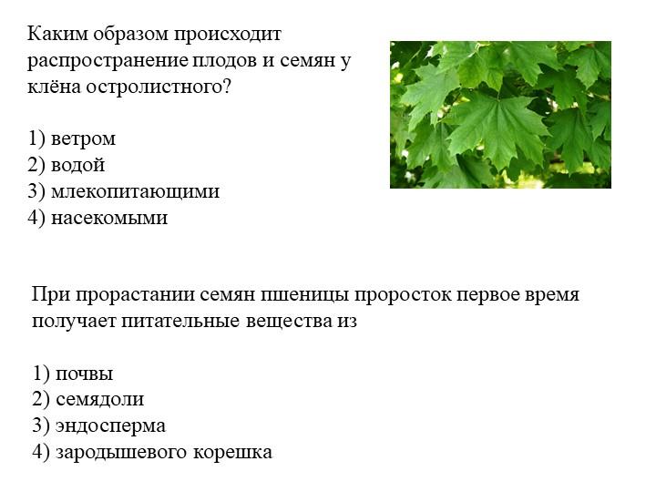 Каким образом происходит распространение плодов и семян у клёна остролистного...