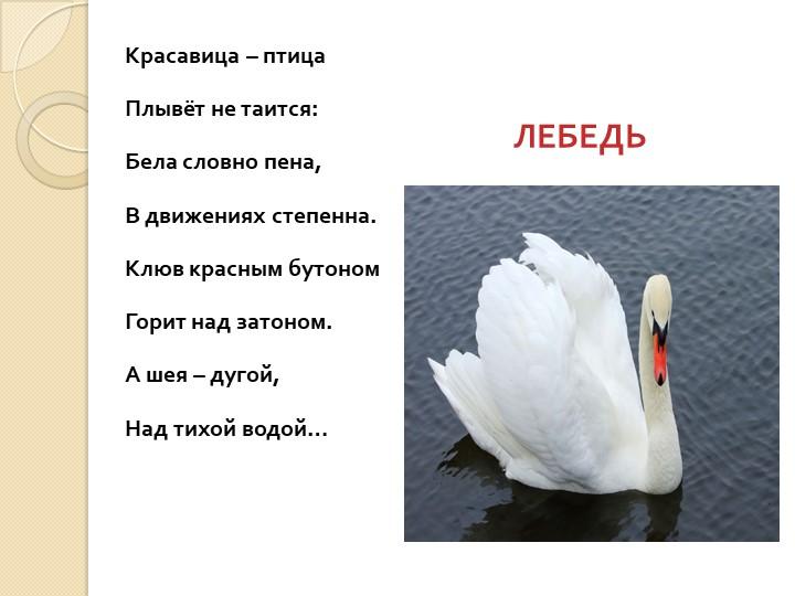 Красавица – птицаПлывёт не таится:Бела словно пена,В движениях степенна...