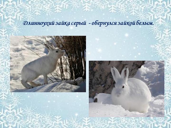 Длинноухий зайка серый  - обернулся зайкой белым.
