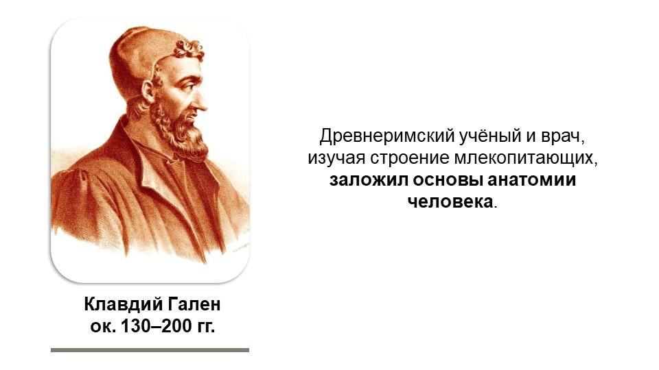 Клавдий Галенок. 130–200 гг.Древнеримский учёный и врач, изучая строение мле...