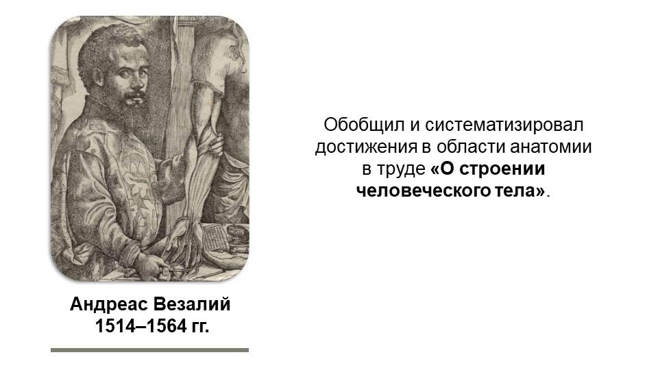 Андреас Везалий 1514–1564 гг.Обобщил и систематизировал достижения в области...