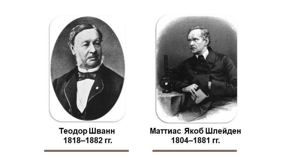 Теодор Шванн 1818–1882 гг.Маттиас Якоб Шлейден1804–1881 гг.