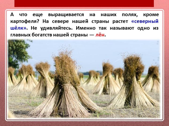 А что еще выращивается на наших полях, кроме картофеля? На севере нашей стран...