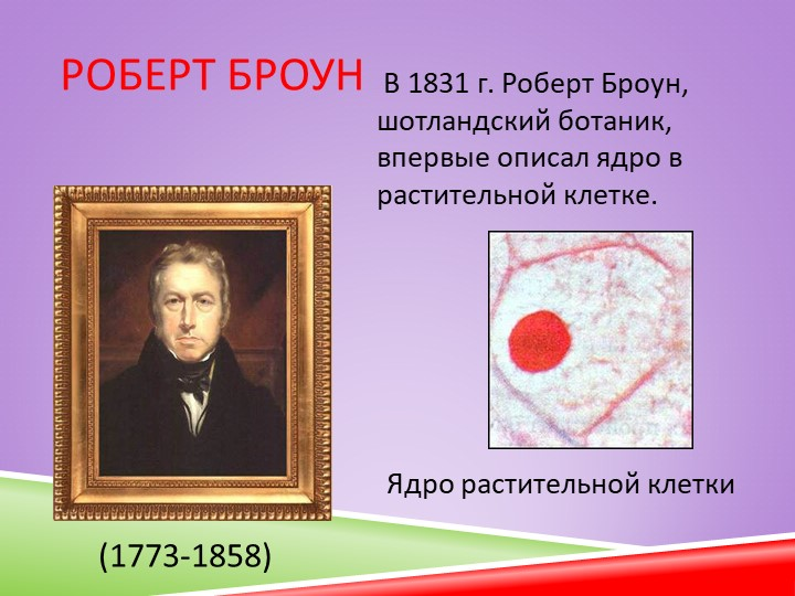 Роберт Броун В 1831 г. Роберт Броун, шотландский ботаник, впервые описал ядро...