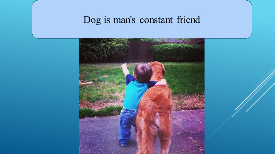 Dog is man's constant friend