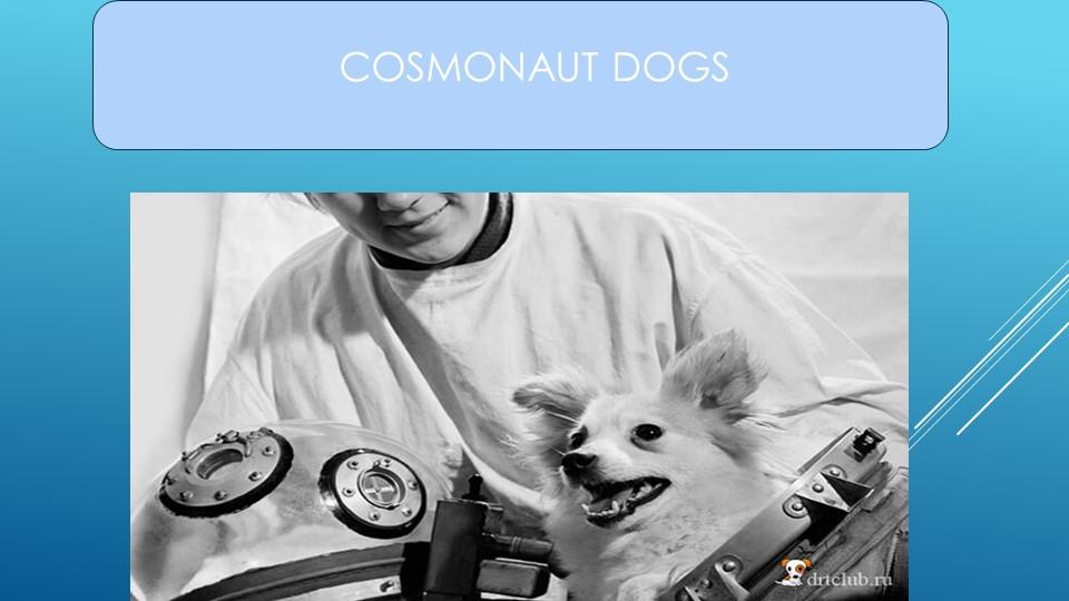COSMONAUT DOGS