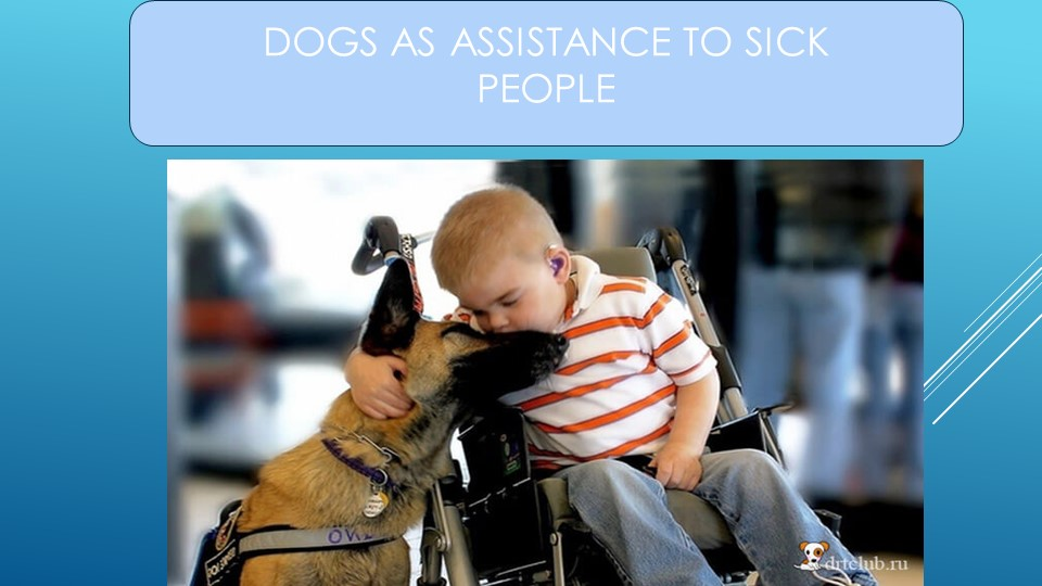DOGS AS ASSISTANCE TO SICK PEOPLE