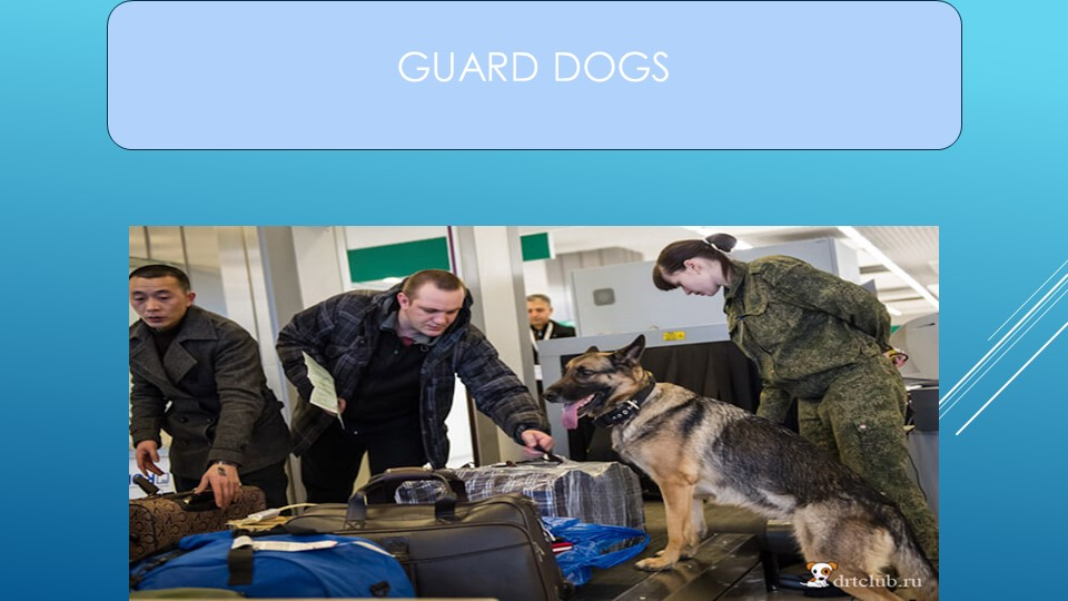 GUARD DOGS