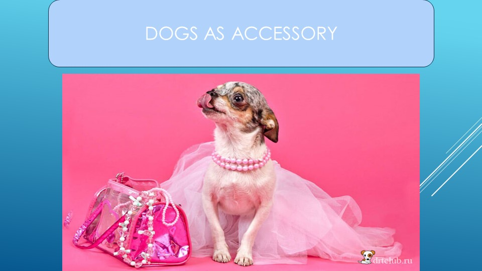 DOGS AS ACCESSORY