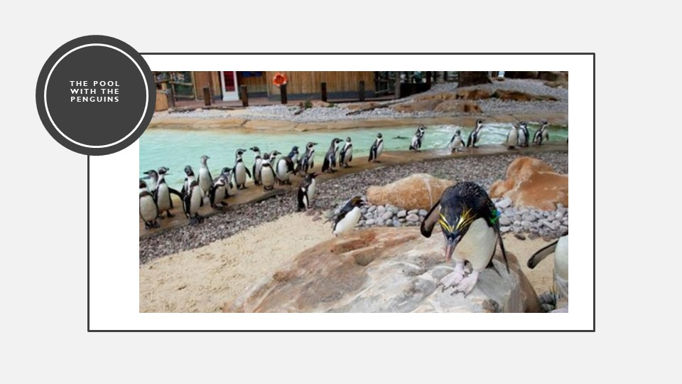 The pool with the penguins