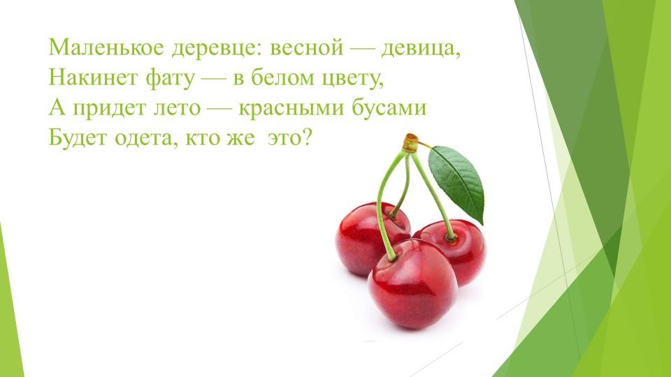 Маленькое деревце: весной — девица, Накинет фату — в белом цвету, А придет л...