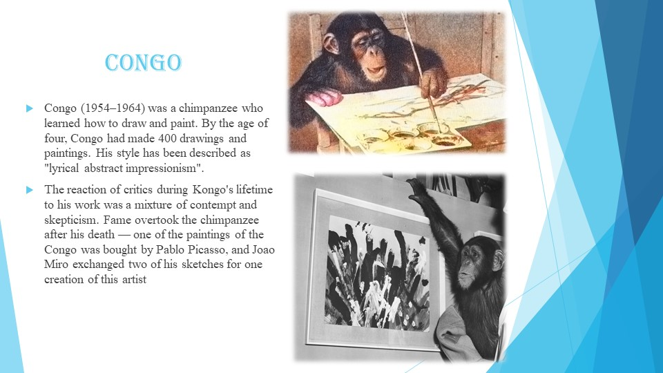 Congo Congo (1954–1964) was a chimpanzee who learned how to draw and paint. B...