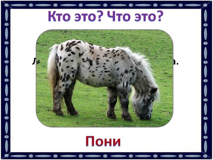 Кто это? Что это?Лошадка маленького росточка. Пони