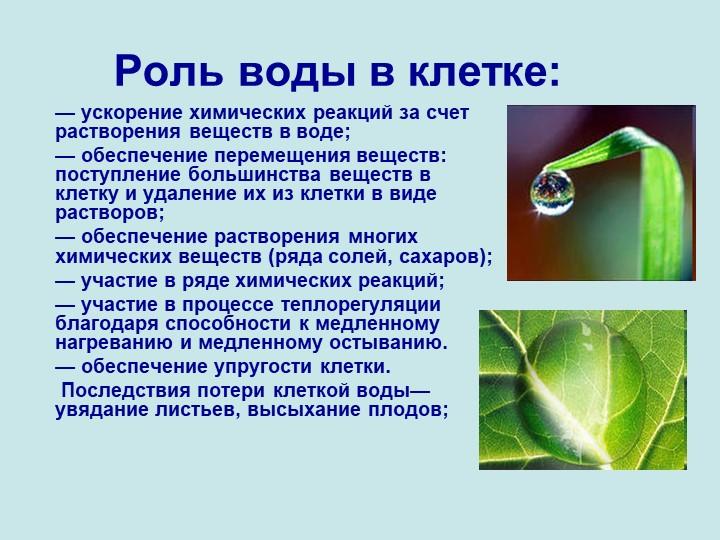 Роль воды в клетке: — ускорение химических реакций за счет растворения вещес...
