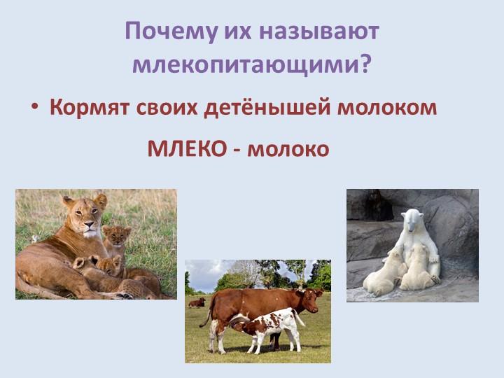 Почему их называют млекопитающими?Кормят своих детёнышей молокомМЛЕКО - молоко