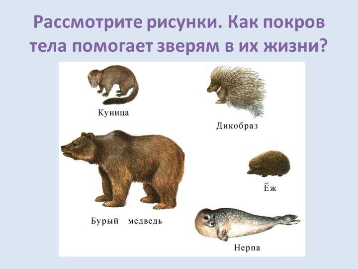 Рассмотрите рисунки. Как покров тела помогает зверям в их жизни?