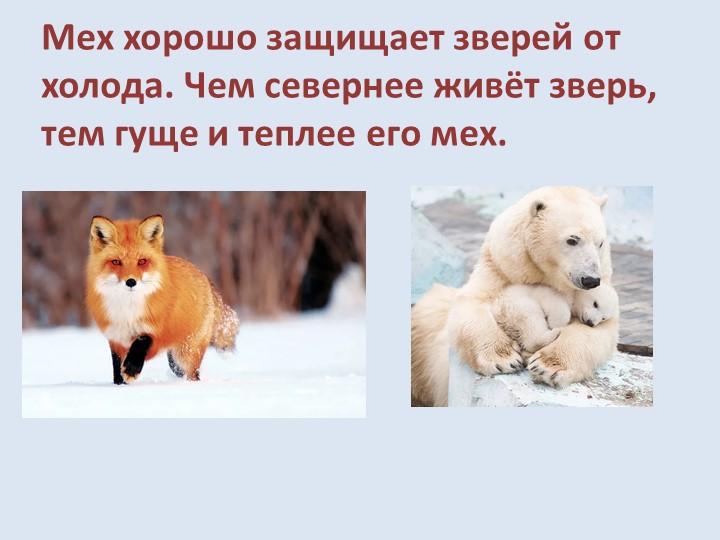 Мех хорошо защищает зверей от холода. Чем севернее живёт зверь, тем гуще и те...
