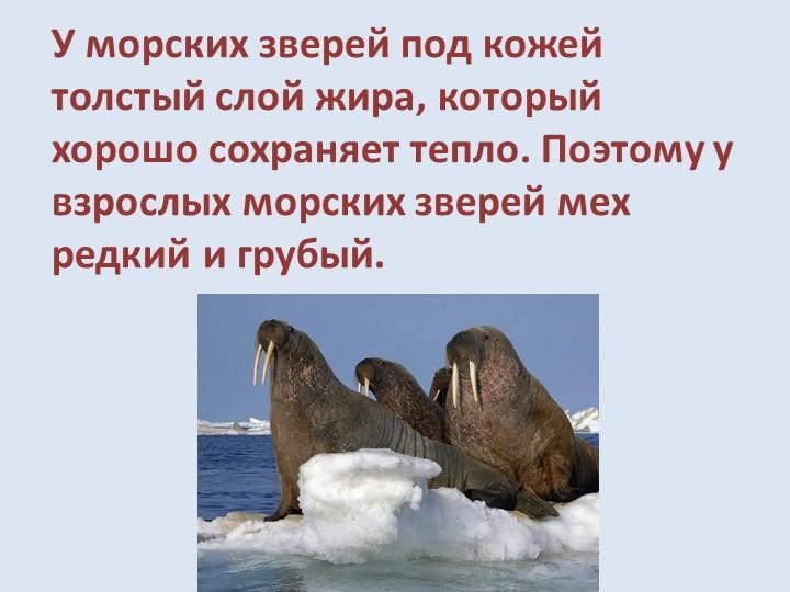 У морских зверей под кожей толстый слой жира, который хорошо сохраняет тепло....