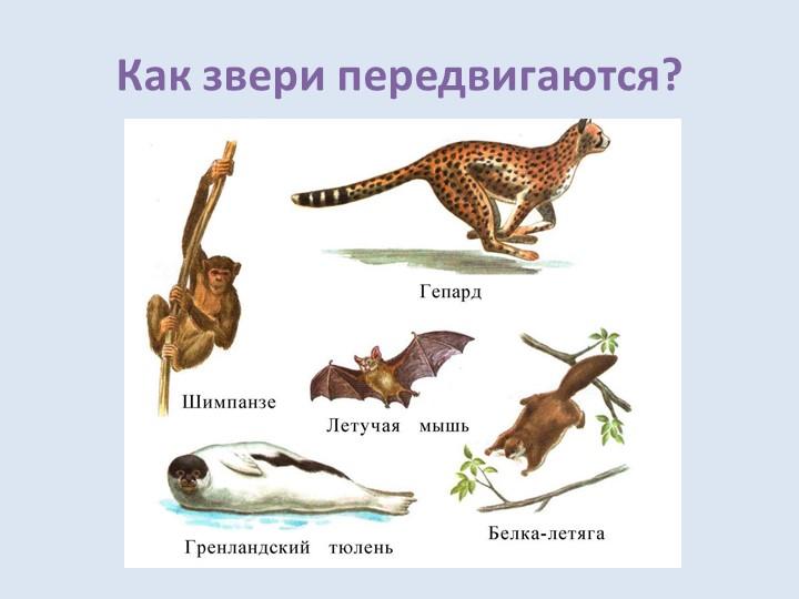 Как звери передвигаются?