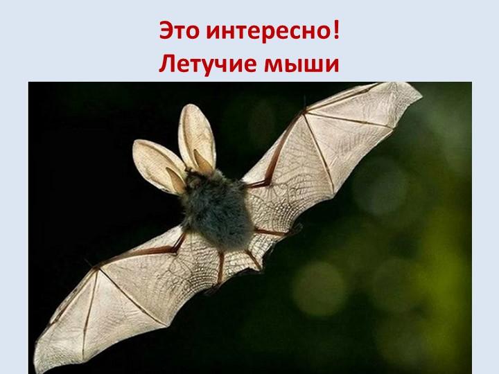Это интересно!Летучие мышиОхотятся летучие мыши по ночам, а вот день проводя...