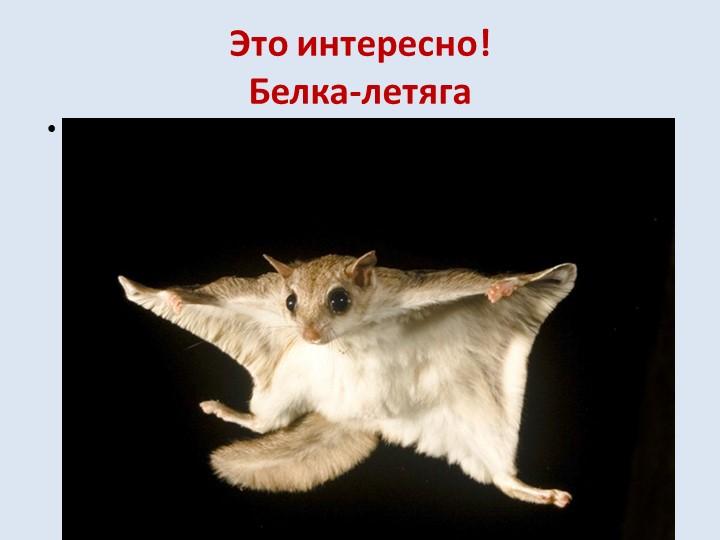 Это интересно!Белка-летягаБелка-летяга — очень интересное создание, напомина...