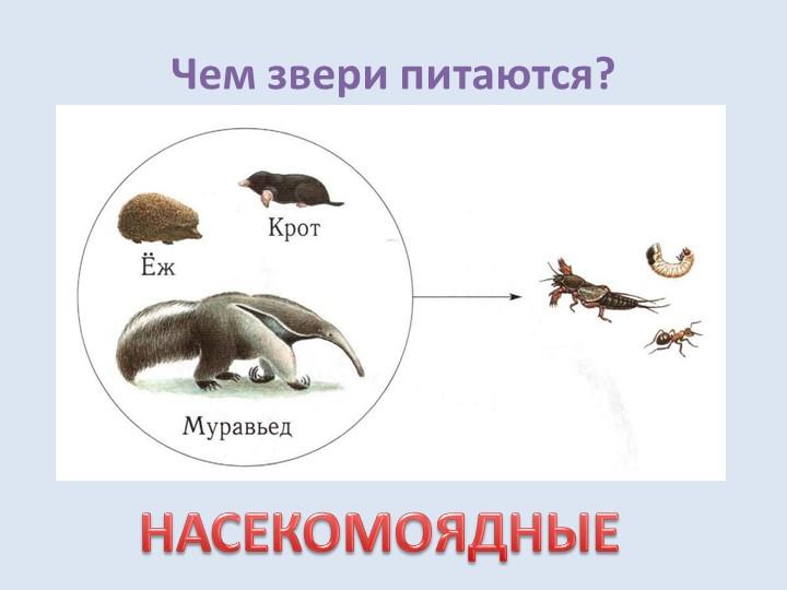 Чем звери питаются?НАСЕКОМОЯДНЫЕ