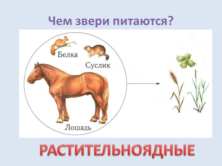 Чем звери питаются?РАСТИТЕЛЬНОЯДНЫЕ